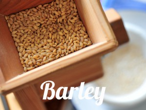 Barley health benefits