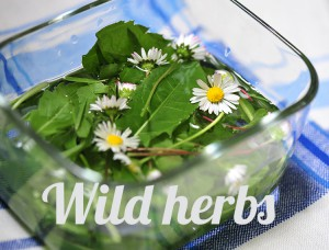 wildherbs_whatfoodcan